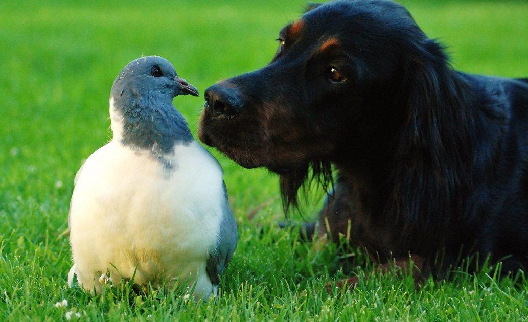Hund mit Taube