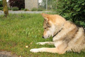 Hundeschule Freising - Antigiftködertraining