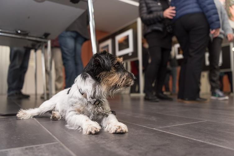 gut erzogener Hund wartet geduldig und ruhig im Geschäft