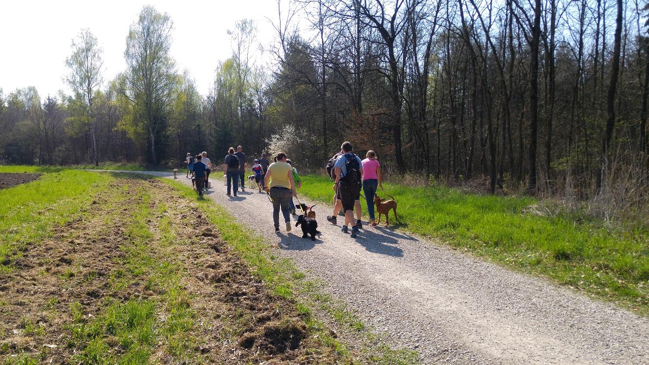 Social Walk - Hundeerziehung und Spaziergang