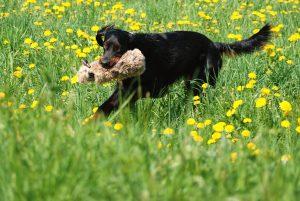 Hund mit Apportierbeute hat Spaß