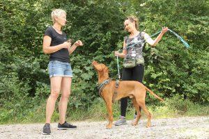 Hundeschule Landshut - Einzelcoaching
