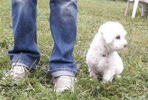 Hundeschule Moosburg - Welpengruppe